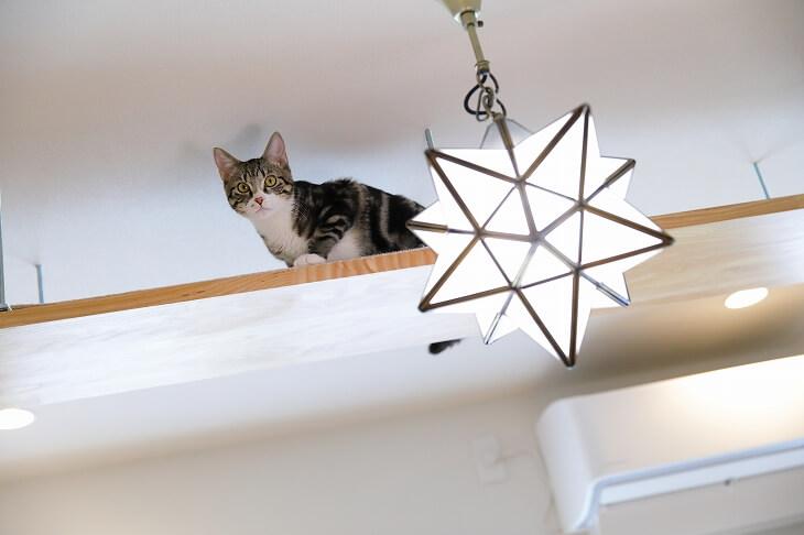 キャットウォークで遊びまわる猫