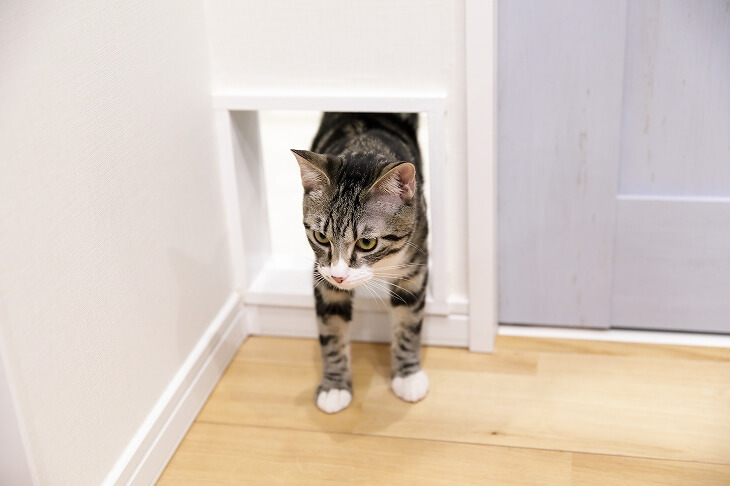 キッチン脇の猫用出入口