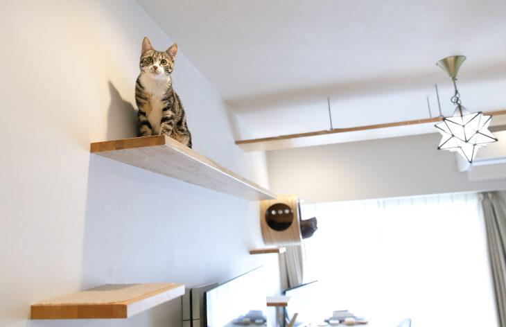 オーナーの「猫愛」が止まらない…猫が縦横無尽に遊ぶ家