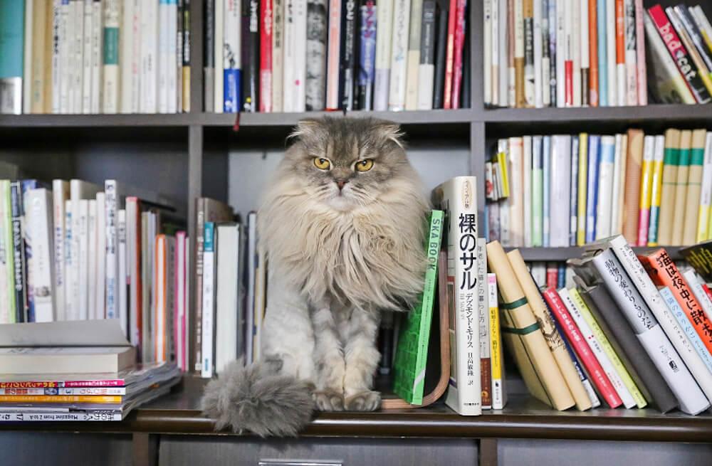 なぜ「猫リフォーム」「猫リノベーション」が増えているのか? コロナ禍に盛り上がる猫ブームの理由を猫ライターに聞いてみた