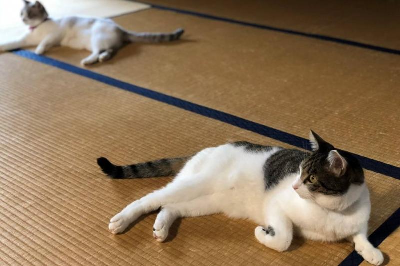 畳はダニが発生しやすいので、ペットを飼っているお宅はこまめな掃除が必要