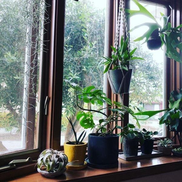 観葉植物は出窓インテリアの定番