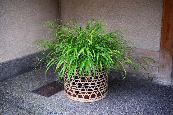 ガーデニングがトレンドになり、観葉植物がさまざまな店舗で販売されるように。和風の玄関にも合う植物を是非取り入れて