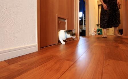 猫が自由に行き来できるような工夫