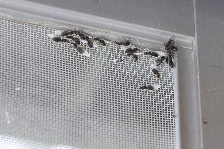 羽アリを見つけた