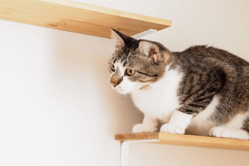 猫と暮らす家づくりの工夫とは? リフォームにも役立つアイデアを紹介